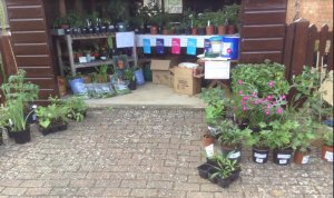 Plant Sale today and all week in aid of Cancer Research UK